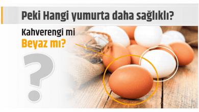 Photo of Peki Hangi yumurta daha sağlıklı? Kahverengi mi, beyaz mı?
