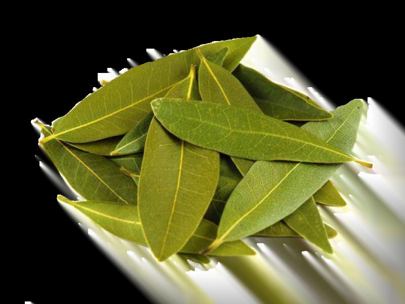 doğal bitkisel defne yaprağı yağı