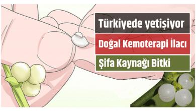 Photo of Doğal Kemoterapi Etkisi Yapan Şifa Kaynağı Bitki! Üstelik Türkiye de Yetişiyor!
