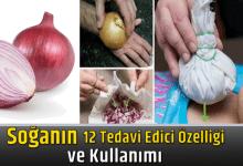 Photo of Soğanın 12 Tedavi Edici Özelliği ve Kullanımı
